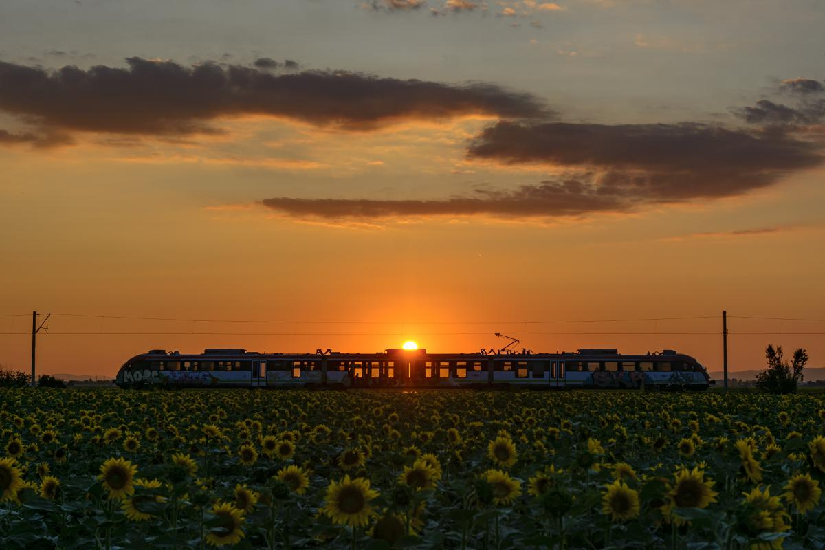 Ivo RADOEV, Bulgaria / Sunset, sunflowers and sunny train